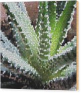 Zebra Cactus  Wood Print