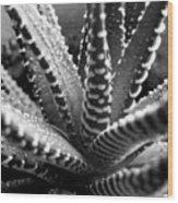 Zebra Cactus Bw Wood Print