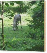 Zebra Crossing Wood Print