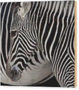 Zebra Head Wood Print by Carlos Caetano