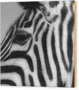 Zebra II Wood Print