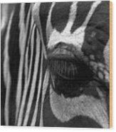 Zebra In Black And White Wood Print