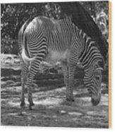 Zebra In Black And White Wood Print
