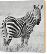 Zebra In The African Savanna Wood Print