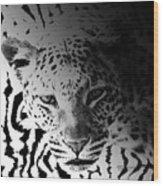 Zebra Kill Wood Print