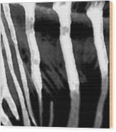 Zebra Lines Wood Print