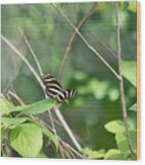 Zebra Longwing Butterfly About To Take Flight Wood Print