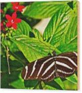 Zebra Longwing Butterfly In Living Desert Zoo And Gardens In Palm Desert-california  Wood Print