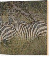 Zebra On The Serengeti Wood Print