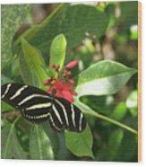 Zebra On The Wing Wood Print