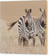 Zebra Pair Wood Print