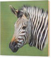 Zebra Portrait Wood Print by Trevor Wintle
