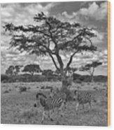 Zebra Running Through Savannah Wood Print
