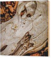 Zebra Skull Wood Print