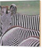 Zebra Stripes In Kenya Wood Print