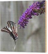 Zebra Swallowtail Butterfly 2 Wood Print