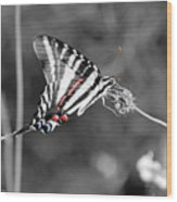 Zebra Swallowtail Butterfly 2016 Wood Print