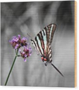 Zebra Swallowtail Butterfly And Stripes Wood Print
