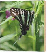 Zebra Swallowtail Butterfly In Green Wood Print