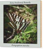 Zebra Swallowtail Butterfly Wood Print