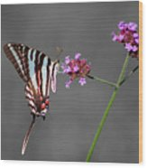 Zebra Swallowtail Butterfly With Verbena Wood Print