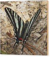 Zebra Swallowtail Wood Print