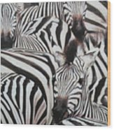 Zebra Triptyche Right Wood Print