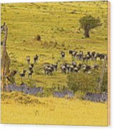 Zebra, Wildebeest And Giraffe Wood Print