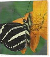 Zebra Wing Profile...   # Wood Print