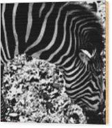 Zebra2 Wood Print