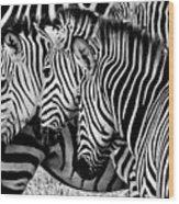 Zebras Triplets Wood Print