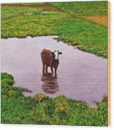 Zen Cow Wood Print