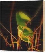Zen Photography - Sunset Rays Wood Print