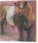 Zeus  Red Belted Galloway Bull Wood Print