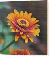 Zinnia Flowers Wood Print