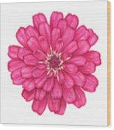 Zinnia In Pink Wood Print