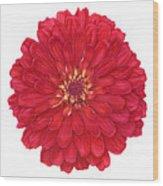 Zinnia In Red Wood Print