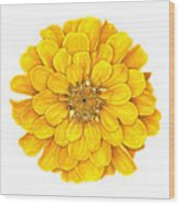 Zinnia In Yellow Wood Print