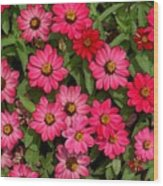 Zinnia Riot Watercolor Wood Print