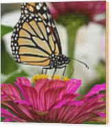 Zinnia Rose And Monarch Wood Print