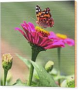 Zinnia Visitor Wood Print