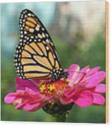 Zinnia With The Monarch Wood Print by Steve Augustin
