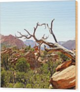 Zion Hike 1 View 4 Wood Print