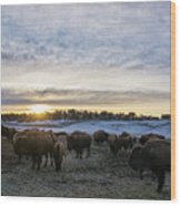 Zion Mountain Ranch Buffalo Herd Wood Print
