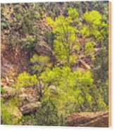 Zion National Park Small Tributary Of The Virgin River Wood Print