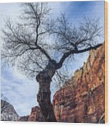 Zion Tree Woman Wood Print