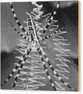 Zipper Spider - Black And White Wood Print
