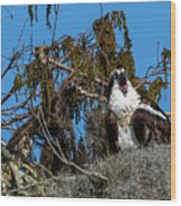 Zombie Osprey Crying For Brains Wood Print