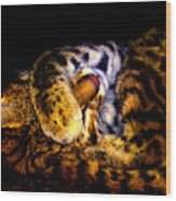 Zoo Baby Wood Print
