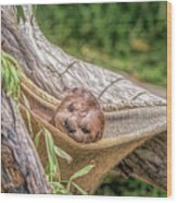 Zoo1 Wood Print